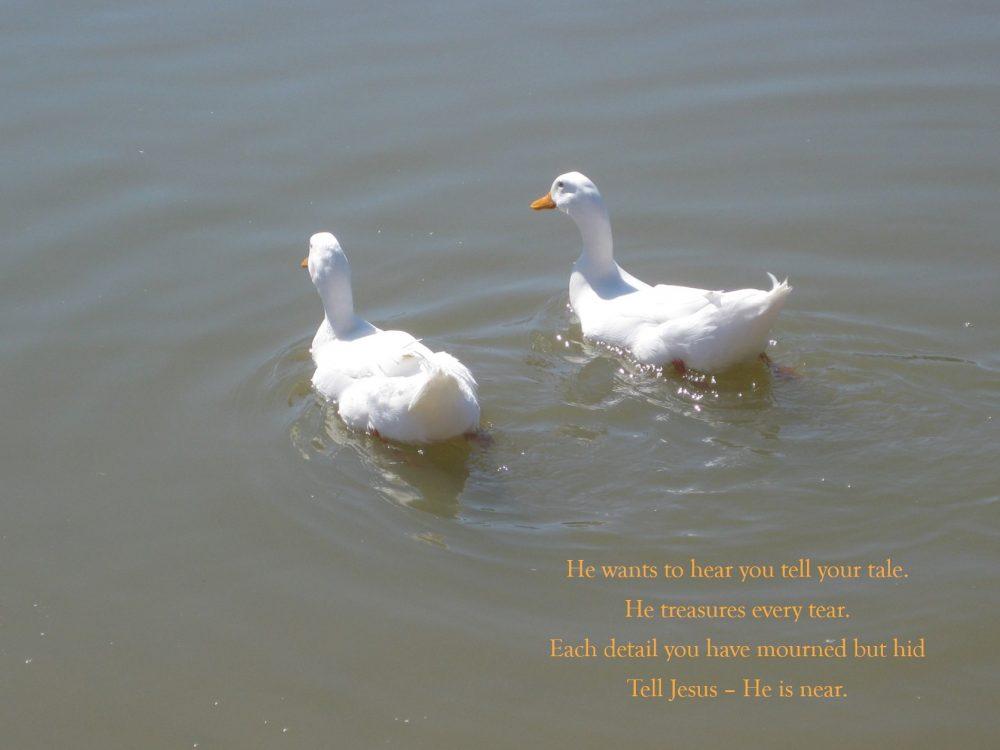 7 Ducks